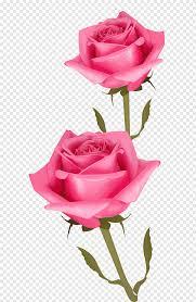 قطع الزهور الوردي والزهور مرسومة باليد Floribunda Plant Stem