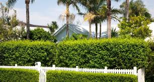 Privacy And Safety Barriers For Your Home Fences Hedges And Gates Budget Direct Au