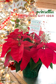 poinsettia gift idea