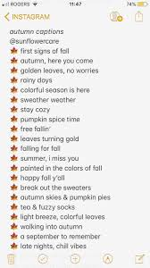 autumn captions animalcaptions autumn captions fall captions