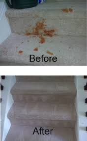 best charlotte carpet cleaning carpet