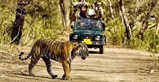 Sariska National Park Tiger Reserve in India: A detailed guide ...