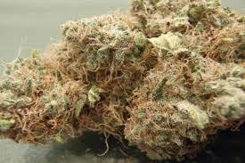 Andys Ak-47 Marijuana Strain | Pot Valet