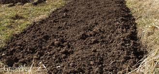 starting a new vegetable plot