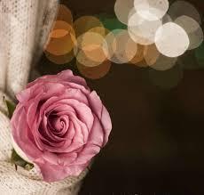 احلى صور ورود و صور زهور 2019 Best Photo Rose Flower