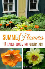 early summer flowering perennials