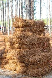 Nature's Bounty, Pine Straw Farmers are Raking It In | Business | thepilot.com