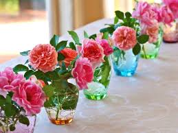 nature beauty flower beautiful rose