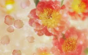 صور و خلفيات زهور عالية الدقة اجمل صور الازهارجديدة 2020 Hd
