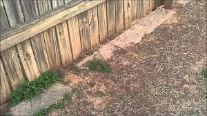 Keep Dog From Digging Under Fence Pets Animals The Humane Society