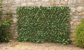 One Or Two Artificial Hedge Trellises