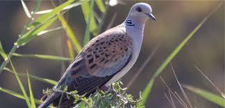 Even familiar birds at risk of extinction, new study finds | BirdLife