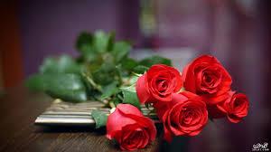 اروع خلفيات ورود 2020 صور ورود رومانسية تحفة 2020 صور زهور مميزة