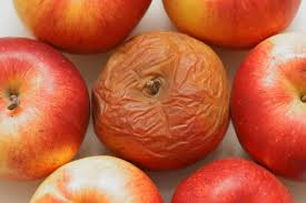 Can One Bad Apple Spoil the Bunch?   Wonderopolis