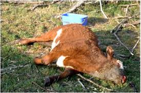 Image result for livestock diseases