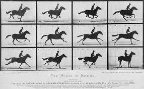 The galloping horse taken by Eadweard Muybridge (1878). First... | Download  Scientific Diagram