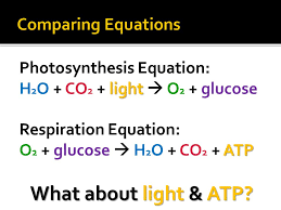 photosynthesis respiration ppt