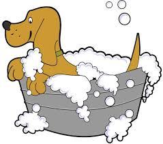 pets at disney world best pet friendly dog friendly resorts and