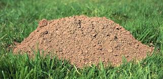 Identifying The Cause Of Holes In Your Lawn Today S Homeowner