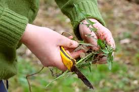 top weed puller for your garden