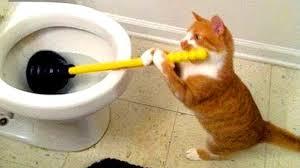 قطط مضحكه شاهد اقوي المواقف المضحكة للقطط مساء الورد