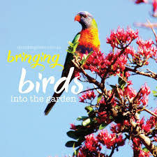 best plants to bring birds to your