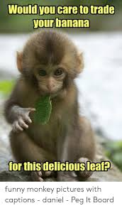 memes about funny monkey pictures
