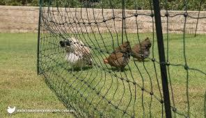 Portable Chicken Fencing Nz Nobillag Info