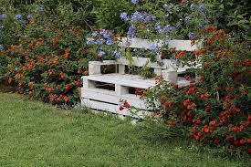 garden flower red green grass