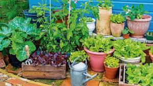 ers market garden best edibles to