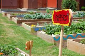 taking care of your backyard vegetable