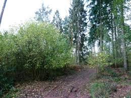 Woodland For Sale Perry Wood, 1.76 acres of mixed woodland, with mature  Douglas fir standards, located between Ross-on-Wye and Ledbury,  Herefordshire. £22,000 (freehold)