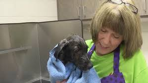 Relyance Recognizes Excellence: Janie Smith works to save shelter dogs from  euthanization | KATV