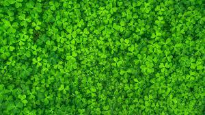 wallpaper c green leaves hd