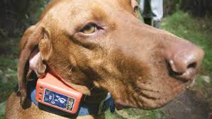 Electric Shock Dog Collars In Nz Pet Shops Spark Outrage Stuff Co Nz