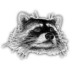 Amazon Com Kw Vinyl Raccoon Head Sketch Truck Car Window Bumper Sticker Decal 5 Automotive