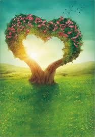 رومانسية على شكل قلب الزهور شجرة الزفاف الخلفيات الخلفيات الربيع