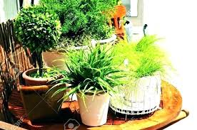 container plants 3 good patio outdoor