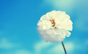 Bodybuilers News صور زهور عالية الدقة Flowers Wallpaper Hd