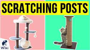 top 10 scratching posts of 2020 video