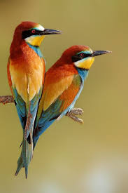 35 beautiful birds images hd