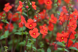 Best Plants with Red Flowers - BBC Gardeners' World Magazine
