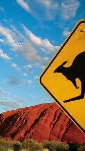 australia caution kangaroos signs