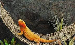 best bearded dragon and other reptile