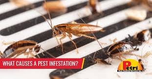 Pest & Termite Control South Florida| Petri Pest Control Services