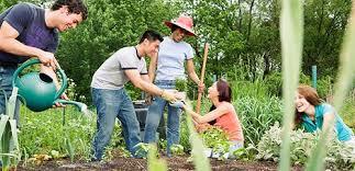 Image result for urban gardening together