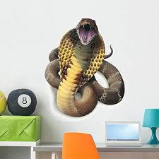 Amazon Com King Cobra Snake Wall Decal By Wallmonkeys Peel And Stick Graphic 36 In H X 29 In W Wm351320 Home Kitchen