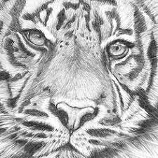 163 Best Animal Drawing Images In 2020 Animal Drawings Drawings