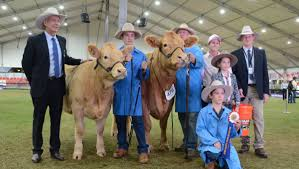 Charolais ring enchanted with Queensland Fanmail | The Land | NSW