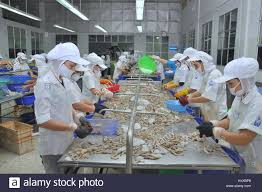 Workers are peeling fresh raw ...